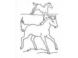 Картинки лошадей и жеребят