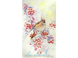 Рисунки птиц акварелью