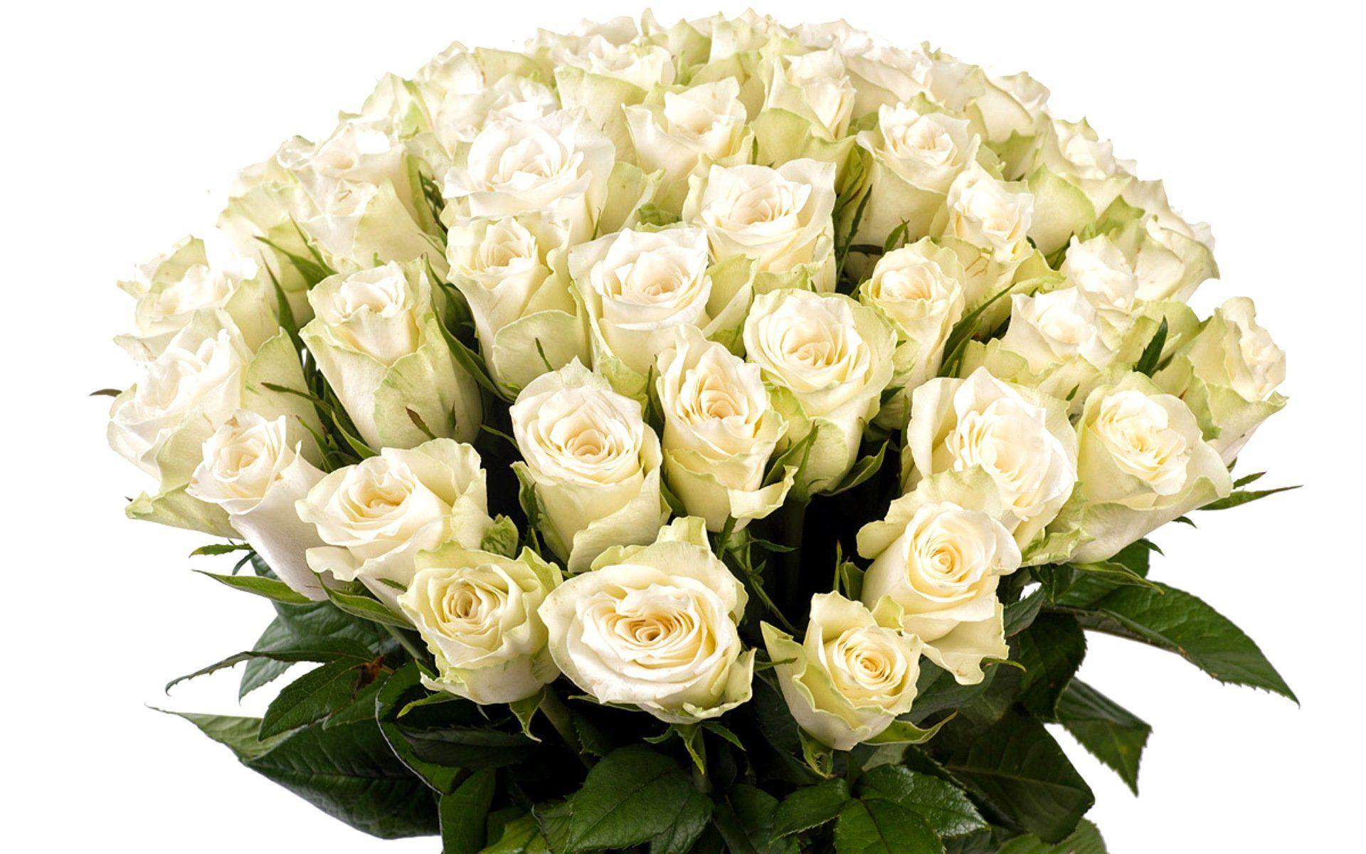Картинка с красивыми белыми розами, клаб открытка начальнице