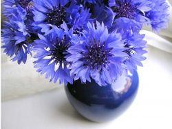 Цветы большие картинки