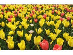 Красивые картинки букетов цветов