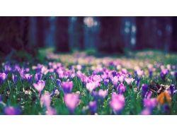 Картинки для рабочего стола скачать бесплатно весна