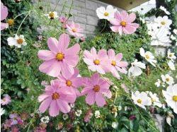 Фото цветы украины