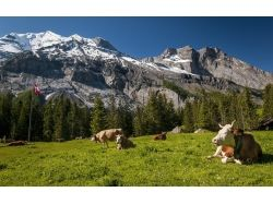 Швейцария обои 8