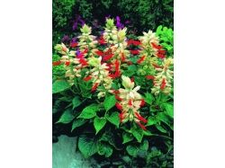 Каталог садовых цветов с фотографиями 3