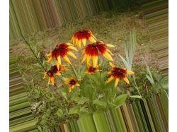 Каталог садовых цветов с фотографиями 5