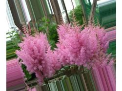 Каталог садовых цветов с фотографиями 6