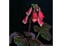 Каталог садовых цветов с фотографиями 7