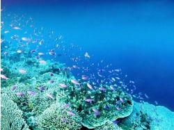 Картинки подводный мир 1