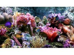 Картинки подводный мир 2