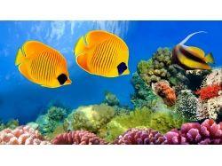 Картинки подводный мир 5