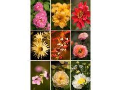 Скачать фото цветов высокого качества 1