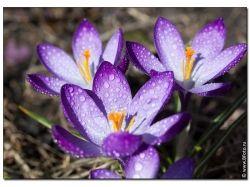 Скачать фото цветов высокого качества 2
