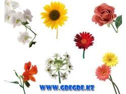 Скачать фото цветов высокого качества 3