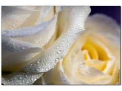 Скачать фото цветов высокого качества 4