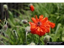 Скачать фото цветов высокого качества 7