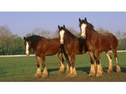 Обои лошадей