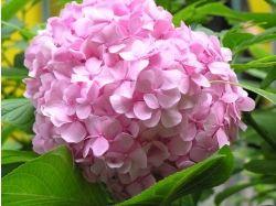 Комнатные цветы картинки и названия 3