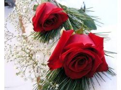 Роза цветы 1