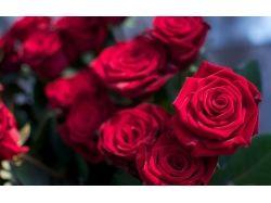 Роза цветы 7
