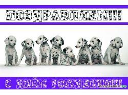 С днем рождения открытки с собаками 1