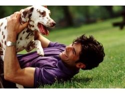 С днем рождения открытки с собаками 5