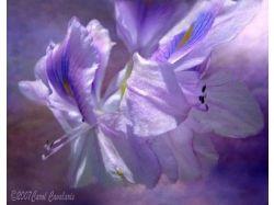 Цветы картинки и название 2