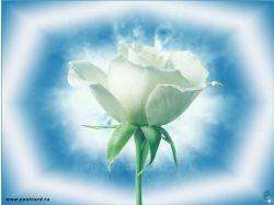 Цветы картинки и название 4