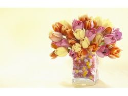 Фото тюльпанов скачать 5