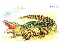 Картинки животных жарких стран 2