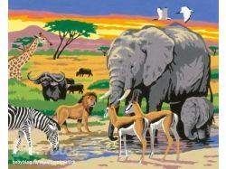 Картинки животных жарких стран 4
