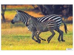 Картинки животных жарких стран 6
