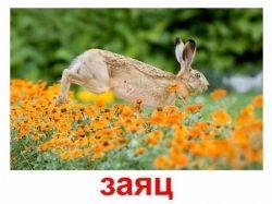 Предметные картинки домашние животные 8