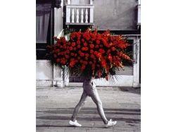 Цветы для любимой 6