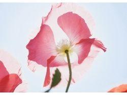 Цветы для любимой 8