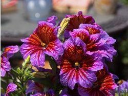 Картинки красивые необычные цветы 3