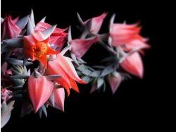 Картинки красивые необычные цветы 4