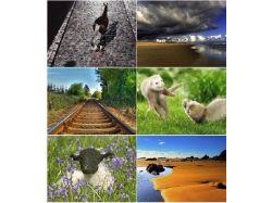 Картинки с живой природой 3
