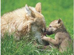 Картинки диких животных с детенышами 1