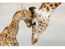 Картинки диких животных с детенышами 2
