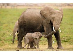 Картинки диких животных с детенышами 3