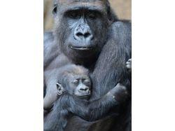 Картинки диких животных с детенышами 7