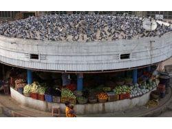 Фото овощного магазина 1