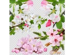Цветы на прозрачном фоне картинки
