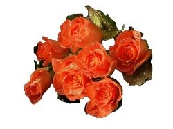 Цветы на прозрачном фоне картинки 2