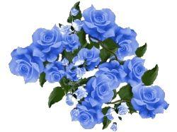 Цветы на прозрачном фоне картинки 3