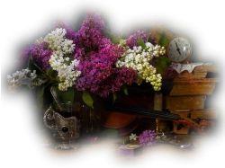 Цветы на прозрачном фоне картинки 5
