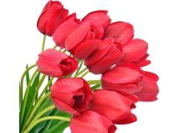 Цветы на прозрачном фоне картинки 6