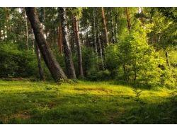 Фото природа беларуси