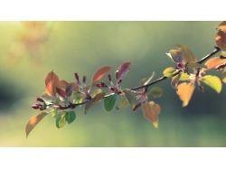 Картинки яблоня 4
